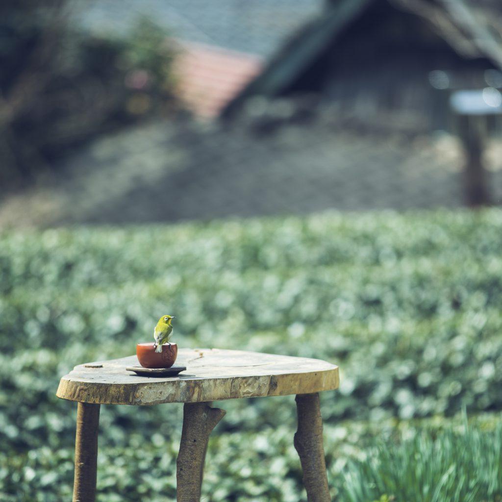 八女茶 日本茶 緑茶 玉露 について 日本一 飲み方 健康 出来るまで 八女 福岡県 お茶 伝統本玉露 お茶種類 写真 tea japanese green yame cha about 514