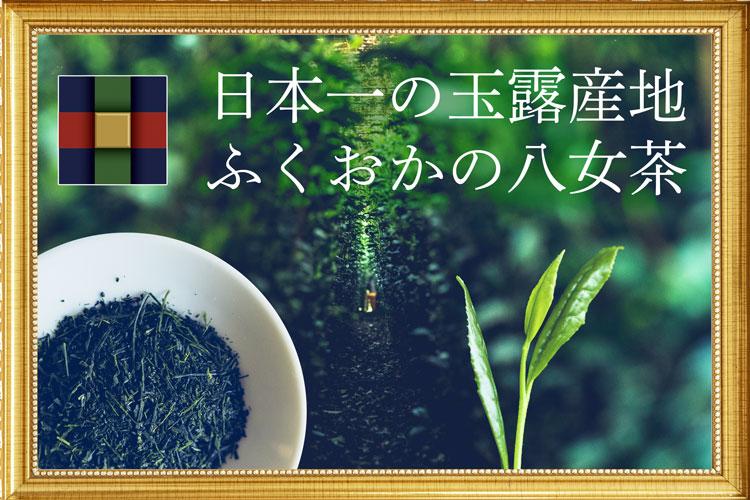 八女茶 日本茶 日本一 玉露 高級 茶 伝統本玉露 プレゼント キャンペーン 八女産