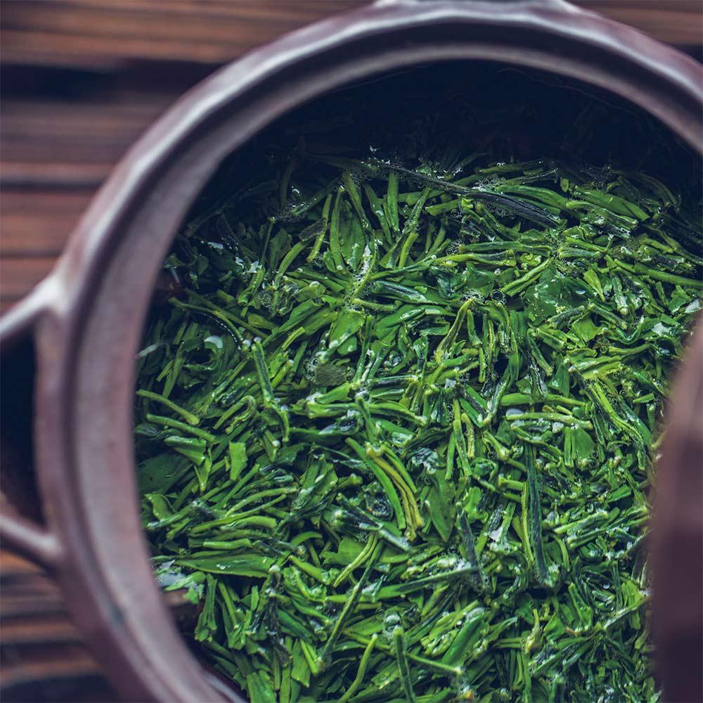 とは 高級茶 日本一 玉露 伝統本玉露 福岡の八女茶 日本茶 八女 緑茶 お茶種類 歴史 特徴 yame tea green gyokuro 6
