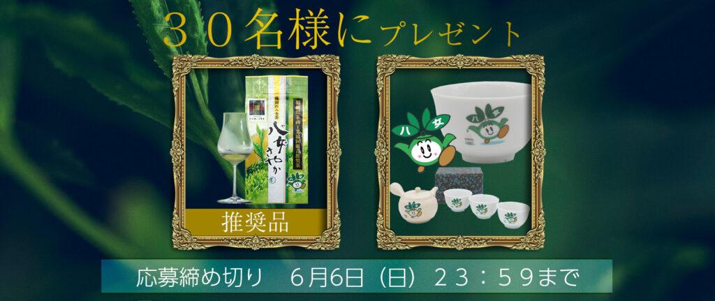情報 企画 八女茶 お茶 高級 簡単応募 ギフト 八女 福岡 緑茶 八女茶丸